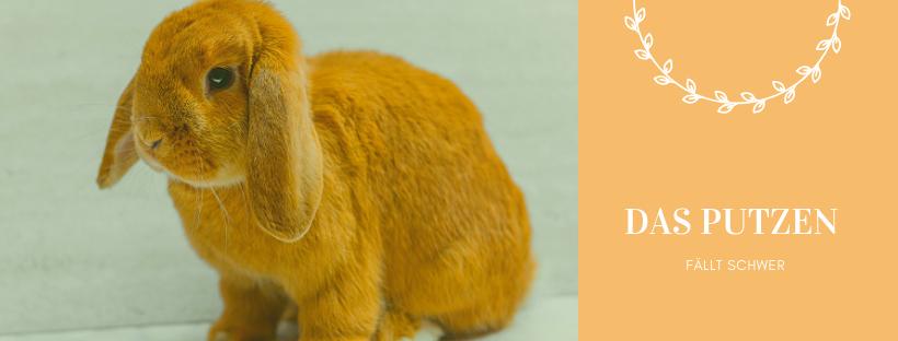 Kaninchen Diät